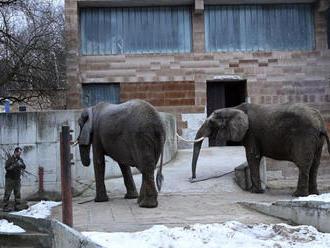 Slonice Maja a Gula z bojnickej zoo dostanú nový domov