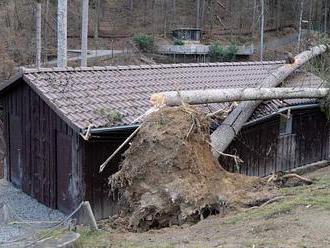 Olomoucká zoo je po vichřici stále zavřená. Uprchlá zvířata zůstávají na svobodě