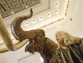 V Japonsku objavili spôsob oživenia mamutov