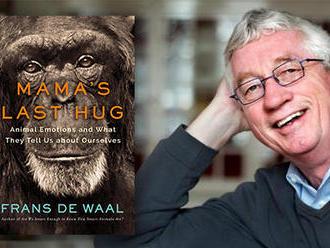 Odkaz MMŠ: O šimpanzoch a ľuďoch a o alfa samcoch, ktorí sa psychicky zrútia, keď prídu o moc