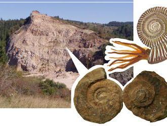 Ako to bolo s morom na území Slovenska pred miliónmi rokov