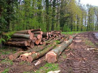 Smutný pohľad! Pri obci Zbudské Dlhé niekto nelegálne vyrúbal takmer 90 stromov
