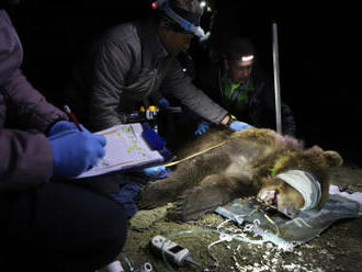 Medvědice opustila okolí Hukvald, vrátila se zpět do CHKO Beskydy