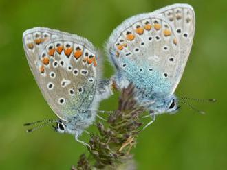 Za 60 let vyhynulo 19 druhů motýlů, polovina zbylých je ohrožená