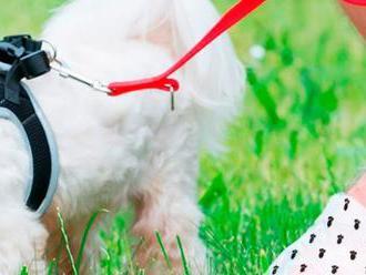 Vďaka vreckám na psie exkrementy   po vás zostanú ulice čisté.