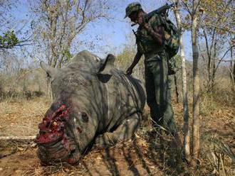 Envirorezort: Dovoz rohov nosorožcov je až do odvolania pozastavený