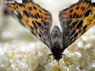 Miliónu druhov hrozí podľa OSN pre činnosť človeka vyhynutie