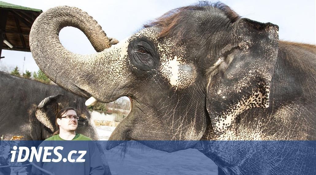 Ústecké zoologické hrozí, že přijde o slony. Kala zemřela, Delhi strádá
