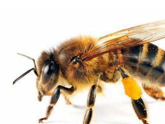 Na Kube žijú šťastné včely