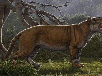 V zásuvke v múzeu našli kosti neznámeho 'obrieho leva'