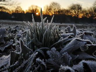 Pozor na prízemné mrazy, môžu ublížiť teplomilným rastlinám