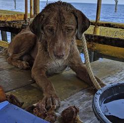 Vysileného psíka zachránili v poslednej chvíli. Našli ho plávať v mori 220 km od pobrežia