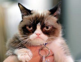 Uhynula celebritná mačka známa svojím namosúreným výzorom