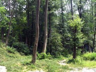 Najvyšší kontrolný úrad: Hospodárenie Lesov ovplyvňovali najmä predaj dreva a rizikové nájmy