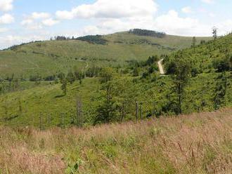 NKÚ: Lesy SR predávajú drevo pod cenu, zarába na tom Milan Fiľo či Ikea
