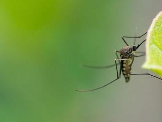 Vedci vedia ako zneviditeľniť ľudí pre komárov