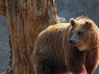 VIDEO: Medveď na Kamčatke ukradol lovcom chladničku priamo z auta