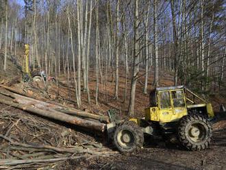 NKÚ kontroloval lesníkov, drevo vraj predávajú pod trhové ceny