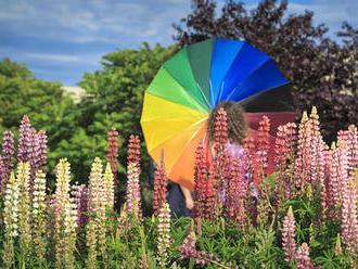 Hlasujte za Homofóba roka! Nominovaní sú neúspešní prezidentskí kandidáti a predstavitelia cirkví