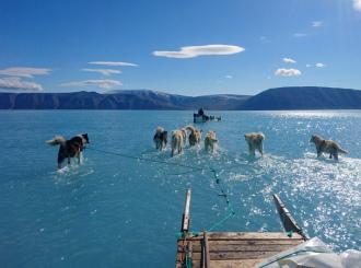 Snímek psů brodících se vodou upozornil na tání ledu v Grónsku