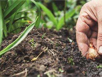 SANAGRO pestuje bioprodukty na najväčšej výmere z ekofariem u nás