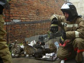 Hasiči v Rusku zachránili z horiaceho zvieracieho útulku 300 mačiek