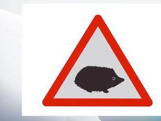 Pozor, na cestě je ježek. Nové značky v Británii zabrání úhynu ohrožených zvířat