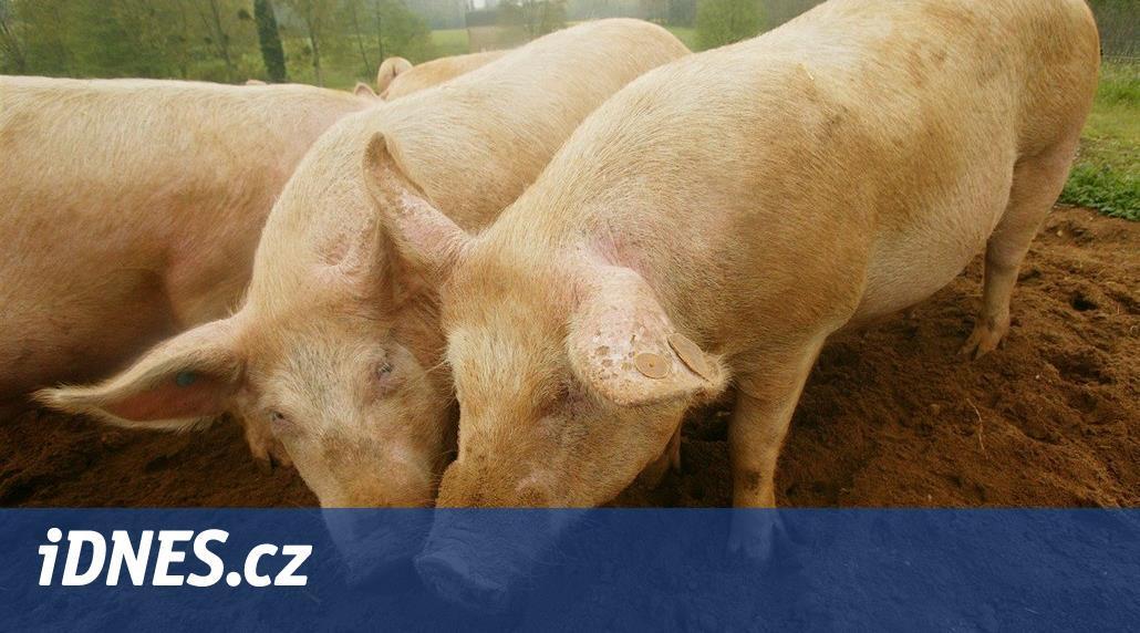 """""""Číňani jsou prasata"""". Banka poslala ekonoma kvůli komentáři na dovolenou"""