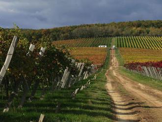Novovznikajúci cech volá po ráznych opatreniach na záchranu vinárstva
