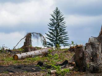 SaS: Cez pripravovanú vyhlášku ÚRSO môže dôjsť k biomasakru v lesoch