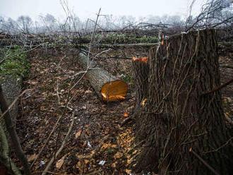 Inšpektori stopli ťažbu vo Veľkej Fatre, ohrozila biotop chráneného druhu