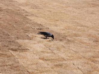 Sahara v centre hlavného mesta: FOTO V Bratislave položili nový trávnik, pohľad naň je žalostný
