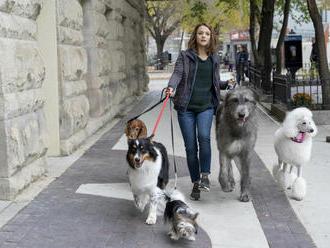 Milovníci psíkov, pozor: Pokračovanie filmu Psia duša prichádza do kín