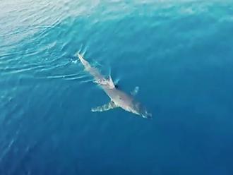 Žraloka nakrútili v ďalšom chorvátskom letovisku: VIDEO Krúžil okolo lode plnej turistov