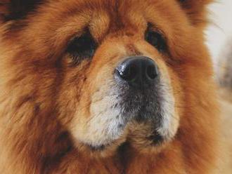 Situácie, ktoré pochopia iba majitelia psov: Tieto ilustrácie si vás získajú