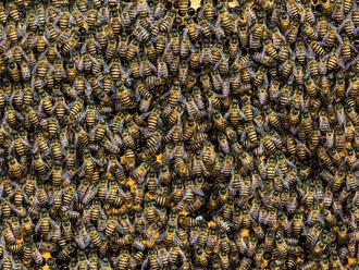 V americkej Montane sa prevrátil kamión, uletelo z neho 133 miliónov včiel