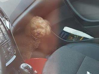 Kým nakupovala, pes sa trápil v rozhorúčenom aute: Nad jej reakciou budete krútiť hlavou