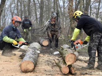 Lesy ČR v pololetí zvedly těžbu kůrovcového dřeva o 112 procent