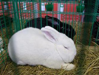 Na chovateľskom dni vo Vychylovke bude i súťaž v králičom hope