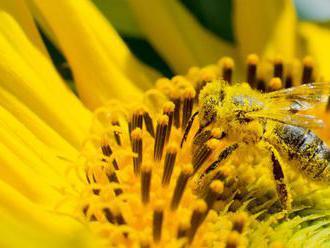 Tohtoročná peľová sezóna bude trápiť alergikov aj naďalej