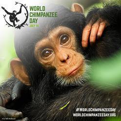 Světový den šimpanzů v Zoo Brno
