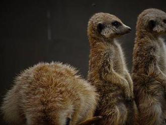 I s malými zoo se pojí velké emoce