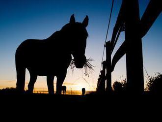 Nielen zmena v pohlavia a ľudského rodu: Žena sa chce zmeniť na koňa