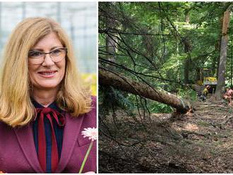 Matečná odmieta návrh na dočasnú ťažobnú uzáveru v lesoch, za úbytok stromov vraj môže zmena klímy