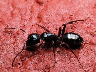 Ako sa zbaviť mravcov v aute?