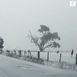 Klokani ve sněhu. Je to zlé znamení?
