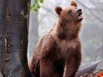 Medveď sa dostal do domu a ušiel cez dieru v stene