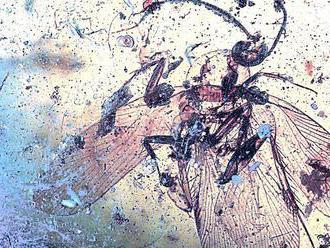 Vedci objavili vírus v jantáre starom 98 miliónov rokov