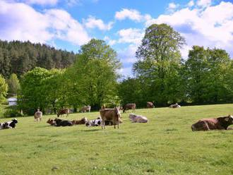 Štát chce zvýšiť počty dobytka na Slovensku, chová sa čoraz menej