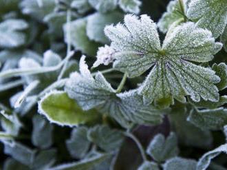Přízemní mráz může poškodit úrodu, varovali meteorologové